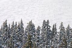 Холостяк Mt Стоковая Фотография