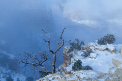 Холод зимы в гранд-каньоне Стоковая Фотография