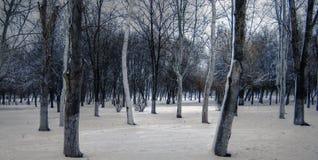 холодная зима парка фантазии дня Стоковое фото RF