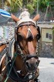 Холодная лошадь Стоковое Фото