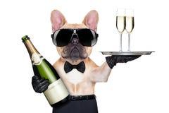 Холодная собака партии стоковая фотография