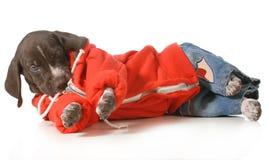 Холодная собака стоковое изображение