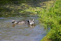 холодная собака Стоковые Изображения