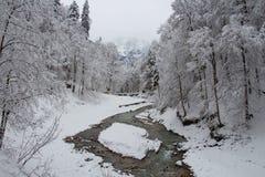 Холодное река между деревьями около ущелья Partnach в зимнем времени Garmisch-Partenkirchen Германия Стоковое фото RF