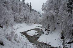 Холодное река между деревьями около ущелья Partnach в зимнем времени Garmisch-Partenkirchen Германия Стоковое Изображение RF