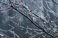 Холодное утро Стоковые Фотографии RF