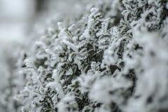холодно Стоковое Фото