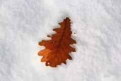 Холодные листья Стоковые Изображения RF