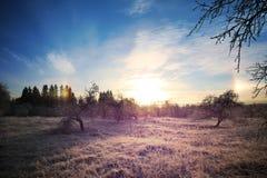 Холодный ландшафт зимы с ярким заходом солнца и синью стоковая фотография rf