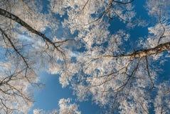 Холодный ландшафт Стоковые Фотографии RF