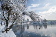 Холодный день в парке Стоковое Изображение