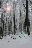 холодный день зим Стоковая Фотография