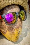 Холодный кокос Стоковое Изображение RF