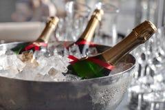 Холодок 3 бутылок вина в ведре льда Стоковые Фото
