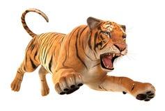 Ход тигра Стоковые Изображения
