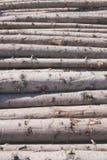 Хранение журналов logging стоковая фотография
