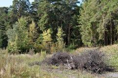 Хранение швырка в лесе Стоковое Изображение