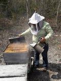 Хранители пчелы работая в лете полуострова Юкатан стоковое фото rf