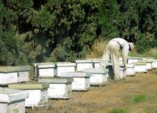 хранитель пчелы Стоковое фото RF