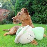 Хранитель собаки стоковые фото
