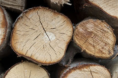 храньте древесина Стоковая Фотография RF