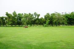 хранят зеленый цвет травы Стоковые Фото