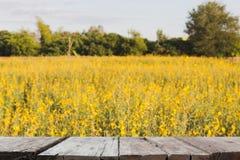 Хранят цветок Sunhemp, который, Pummelo & x28; image& x29 нерезкости; с выбранным fccus w стоковая фотография rf