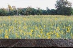 Хранят цветок Sunhemp, который, Pummelo & x28; image& x29 нерезкости; с выбранным fccus w стоковое фото rf