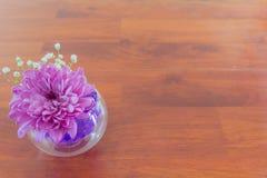 Хризантема в вазе с шариками воды гидрогеля Стоковое Изображение