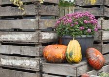 Хризантема и тыквы Стоковое Изображение