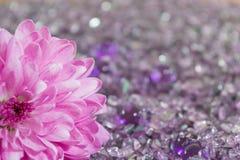 Хризантема на сломленном стекле Стоковое фото RF