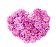 хризантема цветет сердце Стоковая Фотография RF