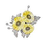 1 хризантема стоковая фотография rf