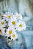 Хризантемы белых цветков на предпосылке голубого одеяла Стоковое Изображение RF
