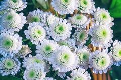хризантемы букета белые Стоковое Изображение RF