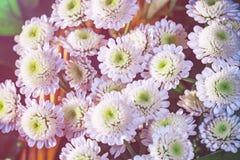 хризантемы букета белые Стоковые Изображения RF