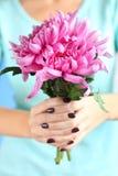 Хризантемы в руках Стоковая Фотография