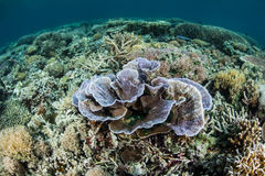 Хрупкие кораллы на рифе Стоковая Фотография RF