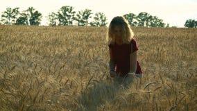 Худенькая женщина идет на пшеничное поле, усмехаясь и держа цветки стоцвета в ее руках на солнечный летний день видеоматериал