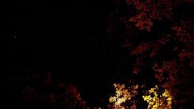 Художественные небеса выше с желтыми и красными деревьями стоковые изображения