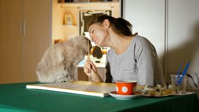 Художник пробует покрасить изображение дома, но ее серый кот предотвращает ее от делать это Протирки домашнего любимчика смешные  сток-видео