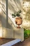 художническая ваза бонзаев Стоковая Фотография