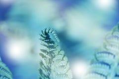 Художническая картина папоротника Тропический шаблон знамени природы Стоковое Изображение
