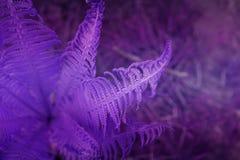 Художническая картина папоротника Тропический шаблон знамени природы Ультрамодный v Стоковое фото RF
