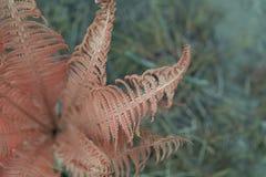 Художническая картина папоротника Тропический шаблон знамени природы Стоковая Фотография RF