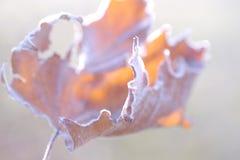 Художнический естественный конспект сухого замороженного кленового листа Стоковые Изображения RF