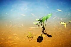художническое изображение травы лезвия Стоковое Изображение RF