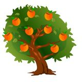 Хурма дерева с плодоовощами и листьями зеленого цвета иллюстрация вектора