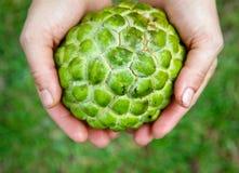 Руки держа Сахар-яблоко Стоковые Фотографии RF