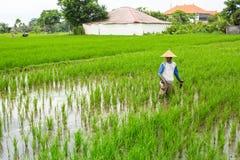 Хуторянин работая на поле риса Стоковая Фотография